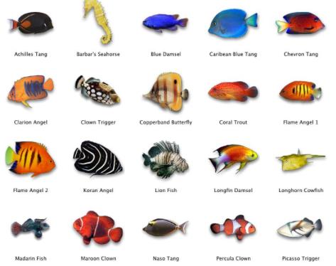 انواع اسماك الزينة التى تعيش مع بعضها بالصور