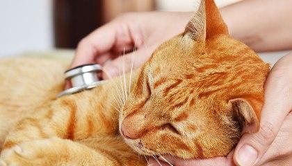 علاج الاسهال عند القطط الحامل