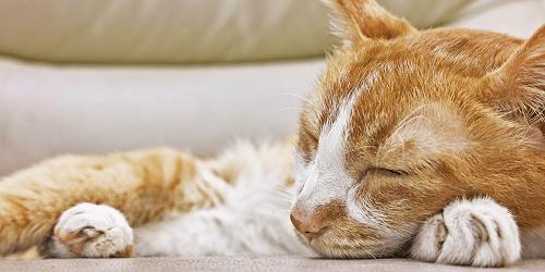 علاج الامساك عند القطط الصغيرة