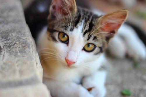 علاج الامساك عند القطط حديثة الولادة