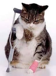 علاج التهاب المفاصل للقطط