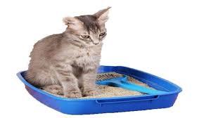 علاج انسداد الامعاء عند القطط