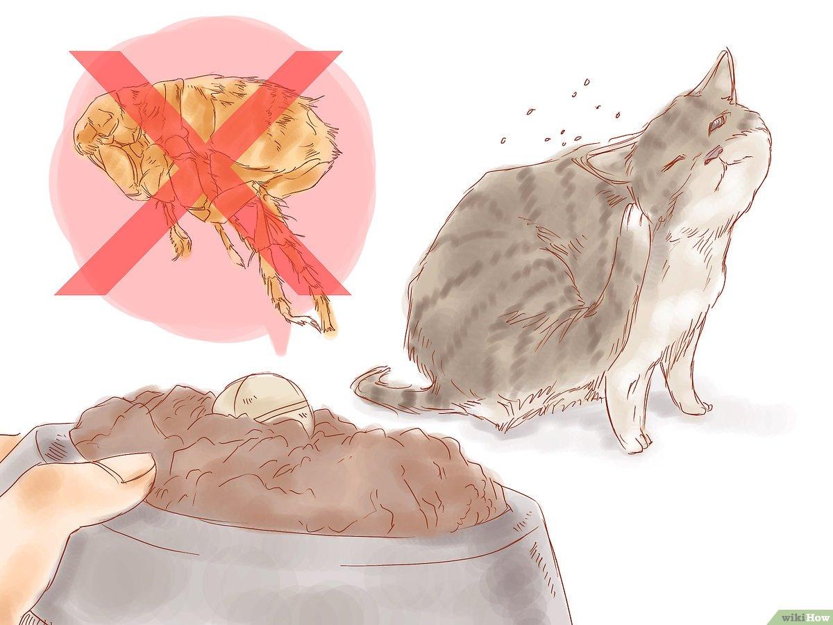 كيفية التخلص من براغيث القطط في المنزل