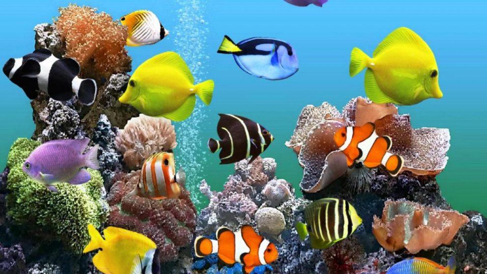 كيفية صنع فلتر حوض السمك يدوى