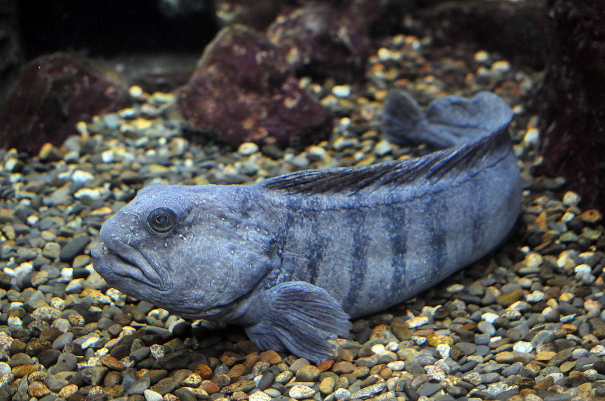 اذكر مميزات الأسماك التي تعيش في القاع