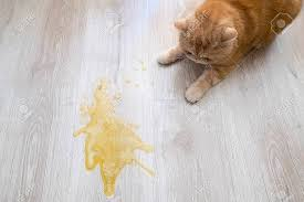 اسباب القيء الاصفر عند القطط