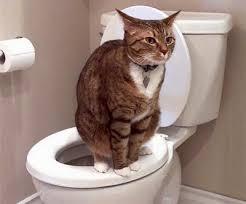 علاج الاسهال عند القطط بالاعشاب