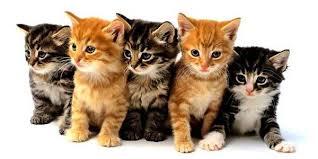 علاج التهاب الاعصاب عند القطط