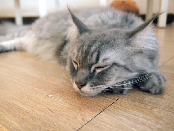 علاج عدم الاتزان عند القطط
