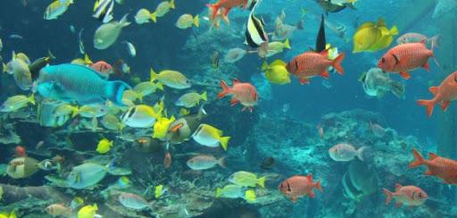 على ماذا تتغذى الأسماك الصغيرة في البحر