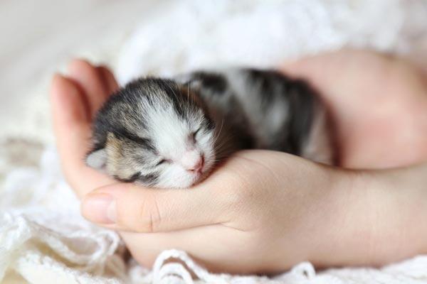 كيفية علاج الاسهال عند القطط الصغيرة
