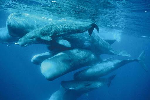 لماذا الحوت يلد ولا يبيض