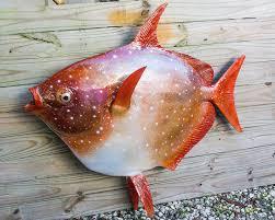 لماذا تعتبر الاسماك من ذوات الدم البارد