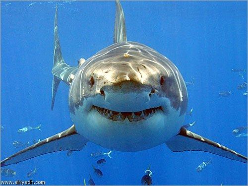لماذا يتأثر سمك القرش في حال غياب الطحالب في البيئة المائية