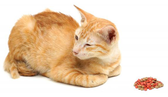 ماهو علاج فقدان الشهية القطط